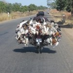 burkina-transport-de-volaille